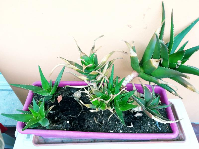 Pension Schiverleih